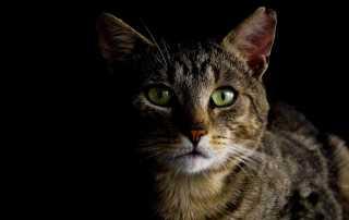 Heilsame Katze